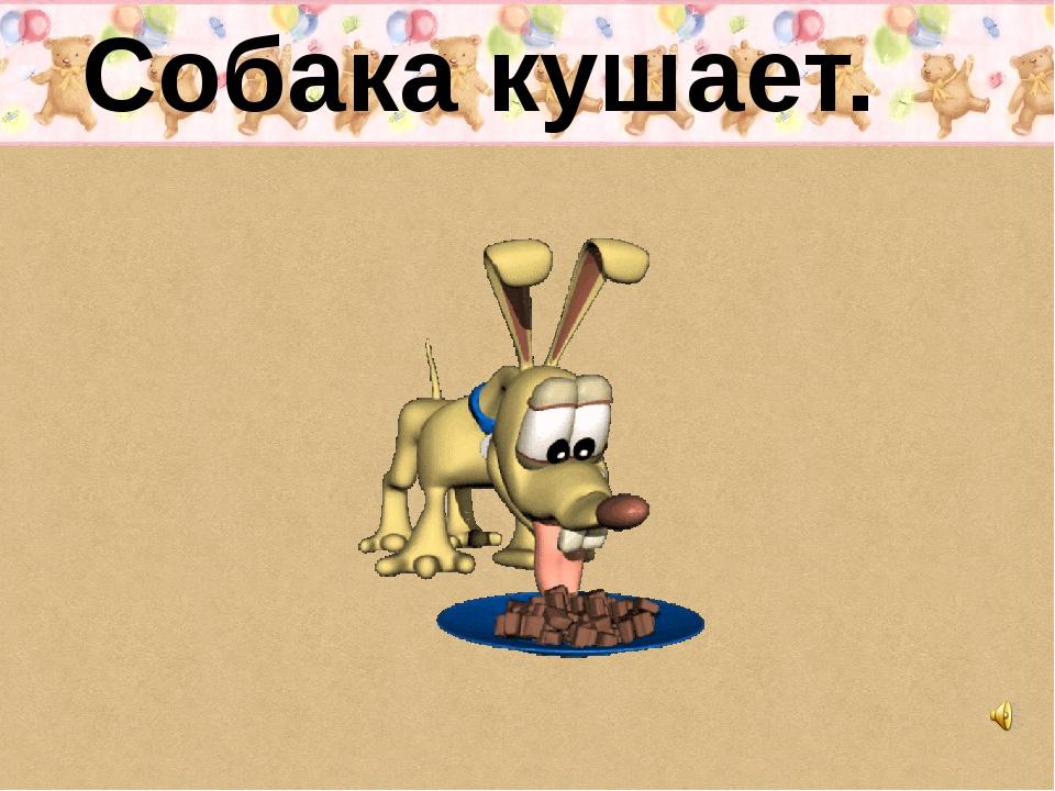 Собака кушает.