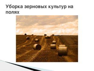 Уборка зерновых культур на полях