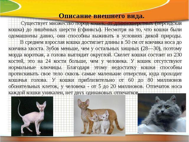 Описание внешнего вида. Существует множество пород кошек: от длинношерстных...