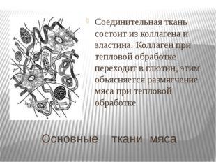 Основные ткани мяса Соединительная ткань состоит из коллагена и эластина. Кол