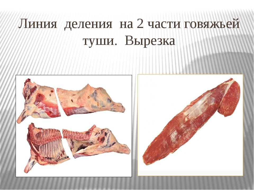 Линия деления на 2 части говяжьей туши. Вырезка