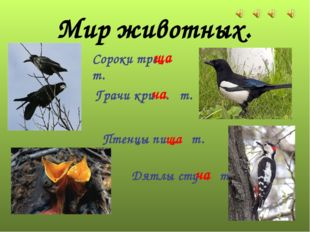 Мир животных. Дятлы сту . т. Сороки тре . т. Птенцы пи . т. Грачи кри . т. ча
