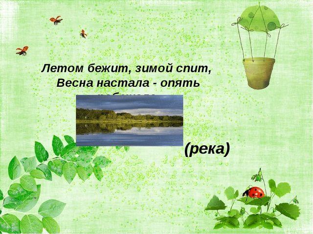 Летом бежит, зимой спит, Весна настала - опять побежала. (река)