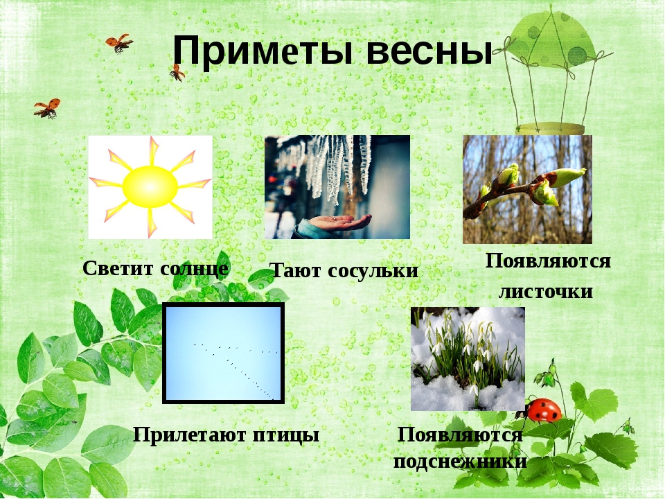 Приметы весны Светит солнце Тают сосульки Появляются листочки Прилетают птицы...