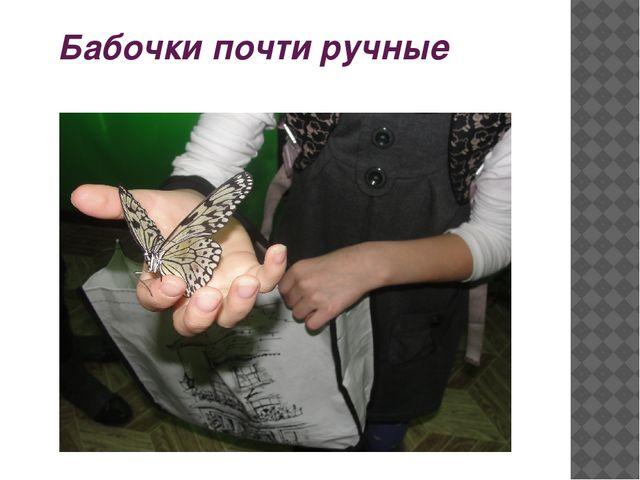 Бабочки почти ручные