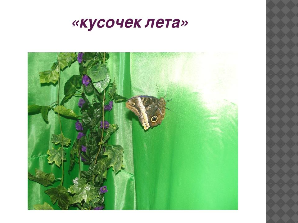 «кусочек лета»