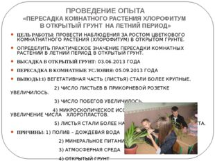 ПРОВЕДЕНИЕ ОПЫТА «ПЕРЕСАДКА КОМНАТНОГО РАСТЕНИЯ ХЛОРОФИТУМ В ОТКРЫТЫЙ ГРУНТ Н