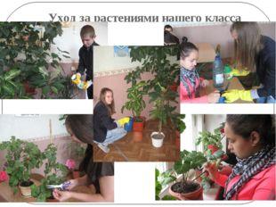 Уход за растениями нашего класса