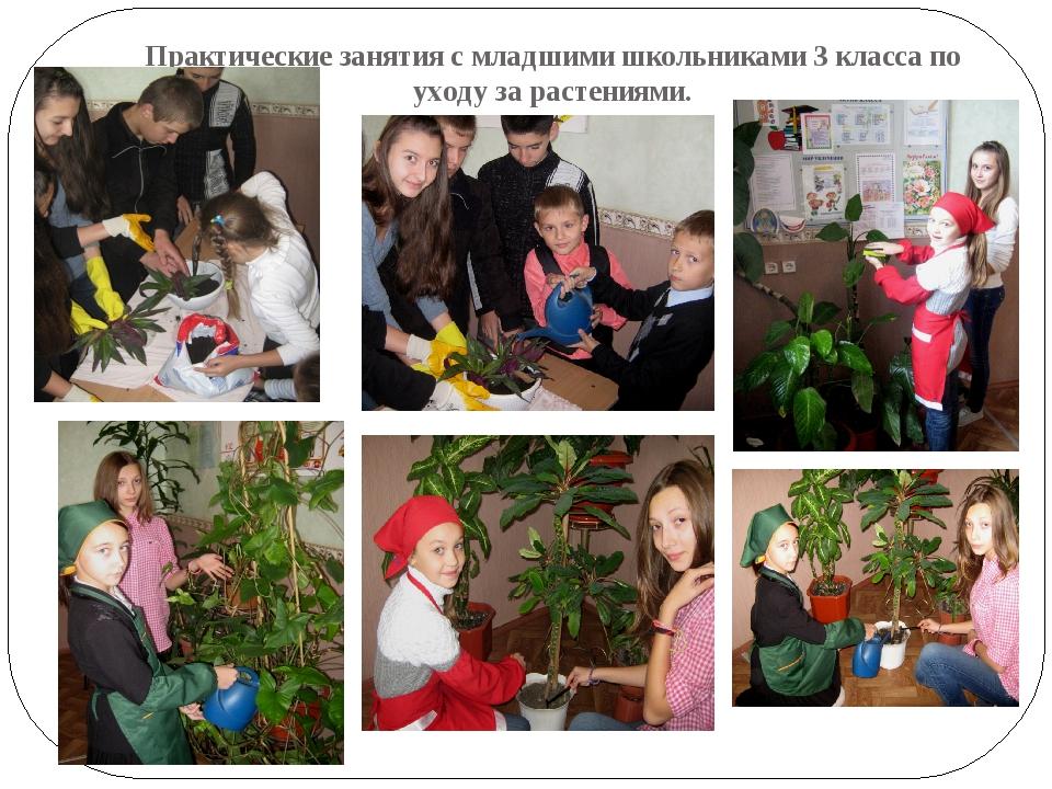 Практические занятия с младшими школьниками 3 класса по уходу за растениями.