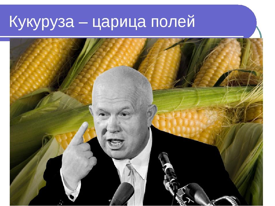 Кукуруза – царица полей