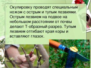 Окулировку проводят специальным ножом с острым и тупым лезвиями. Острым лезви