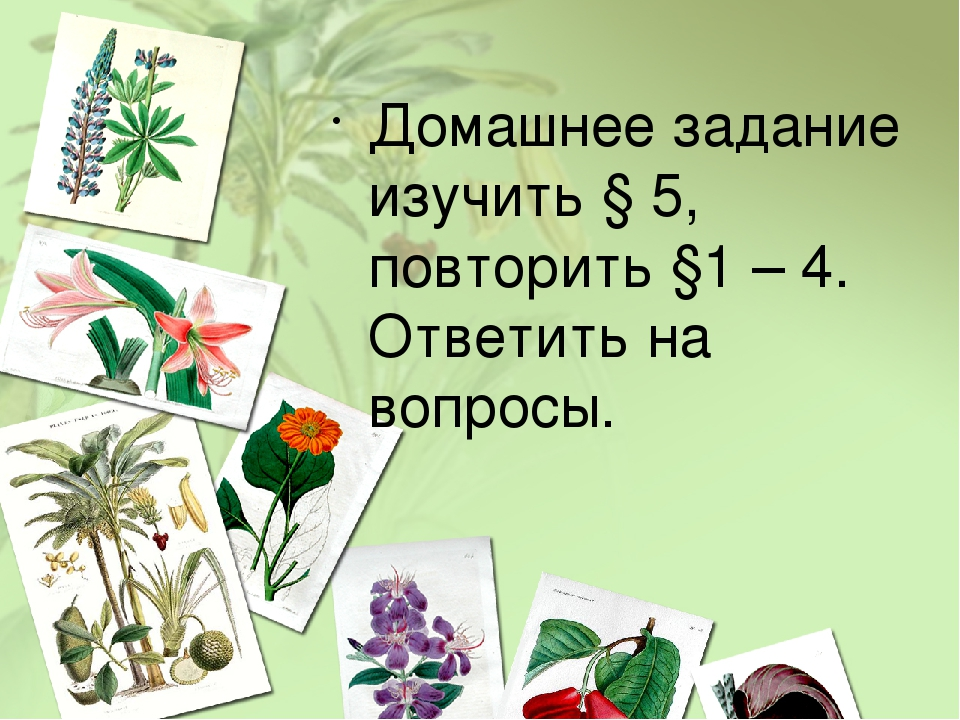 Домашнее задание изучить § 5, повторить §1 – 4. Ответить на вопросы.