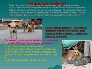 Уличные собаки Даже постоянно проживая в городе и видя животных только в зооп