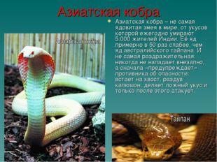 Азиатская кобра Азиатская кобра – не самая ядовитая змея в мире, от укусов ко