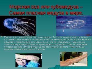 Морская оса или кубомедуза – Самая опасная медуза в мире. Морские осы – сравн