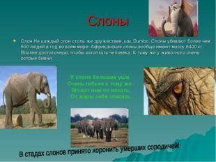 Слоны Слон Не каждый слон столь же дружествен, как Dumbo. Слоны убивают более