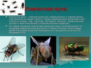 Комнатная муха Комнатная муха - главный разносчик инфекционных и паразитарных