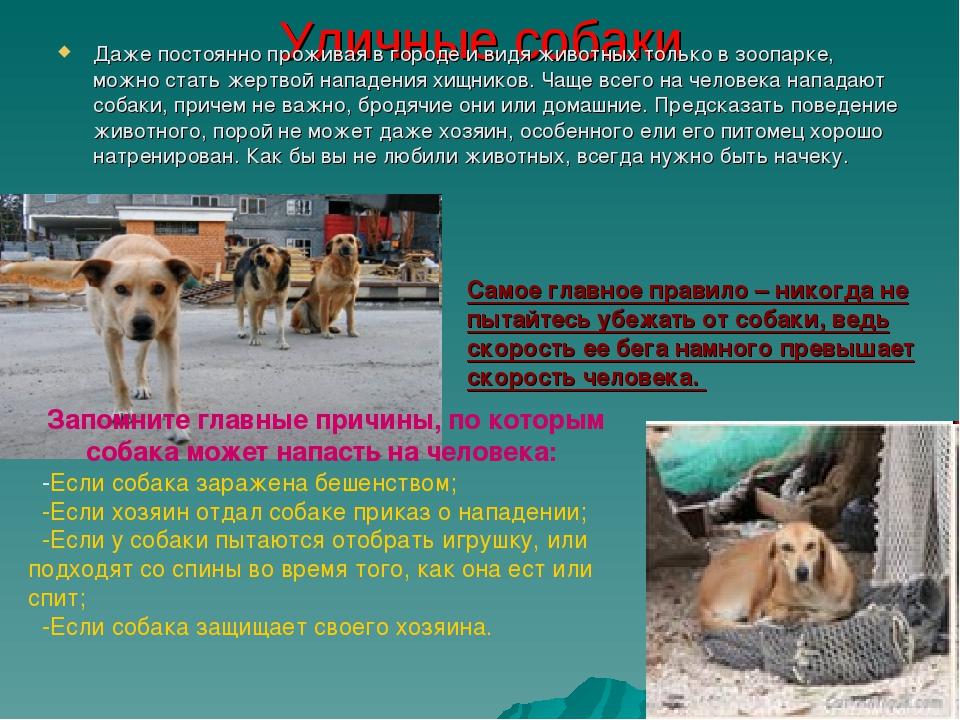 Уличные собаки Даже постоянно проживая в городе и видя животных только в зооп...