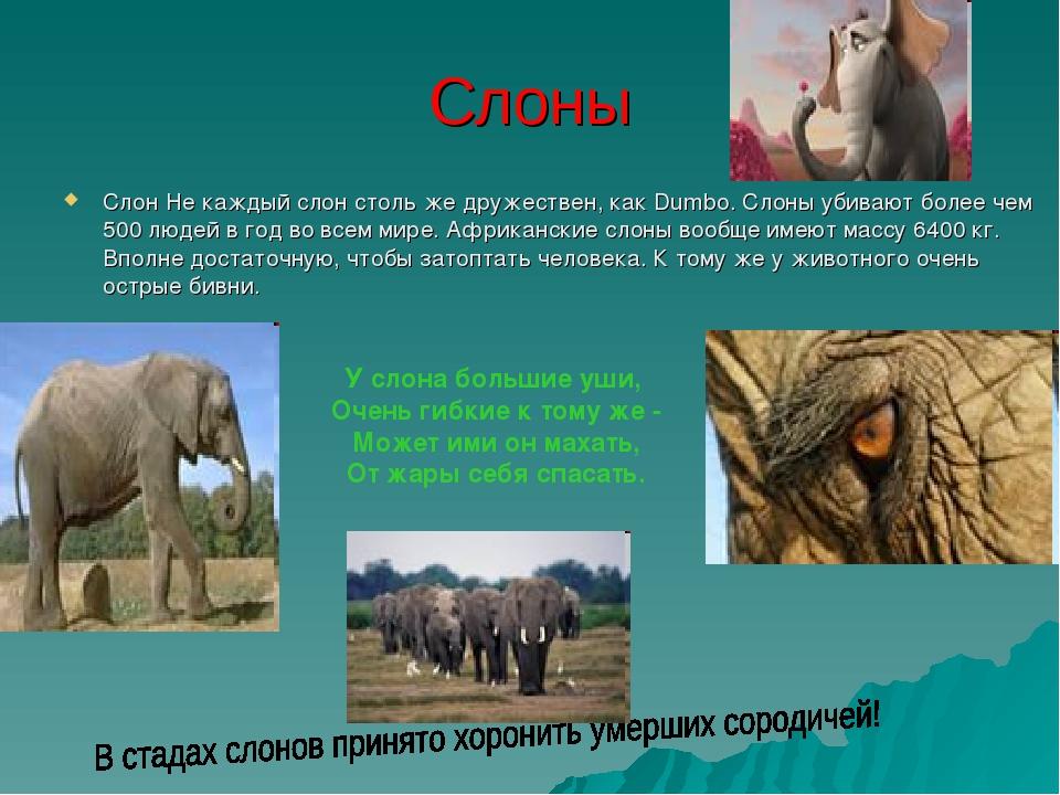 Слоны Слон Не каждый слон столь же дружествен, как Dumbo. Слоны убивают более...