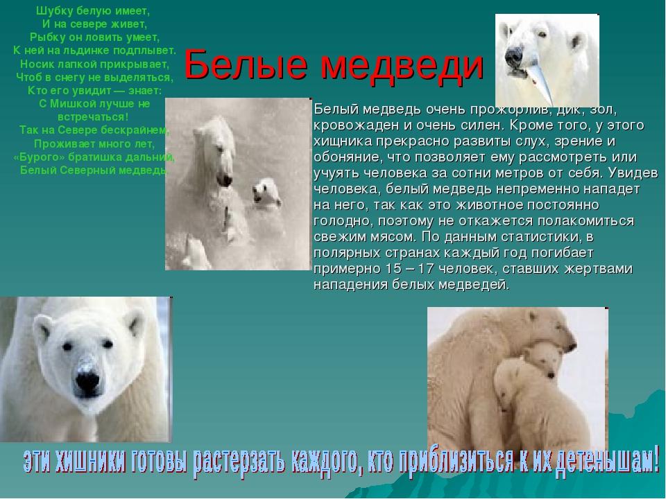 Белые медведи Белый медведь очень прожорлив, дик, зол, кровожаден и очень сил...