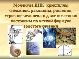 Молекула ДНК, кристаллы снежинок, раковины, растения, строение человека и даж