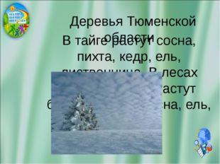 Деревья Тюменской области В тайге растут сосна, пихта, кедр, ель, лиственниц