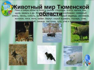 Животный мир Тюменской области Реки и озёра области богаты рыбой: стерлядь, о