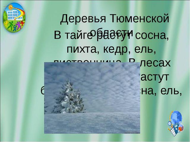 Деревья Тюменской области В тайге растут сосна, пихта, кедр, ель, лиственниц...