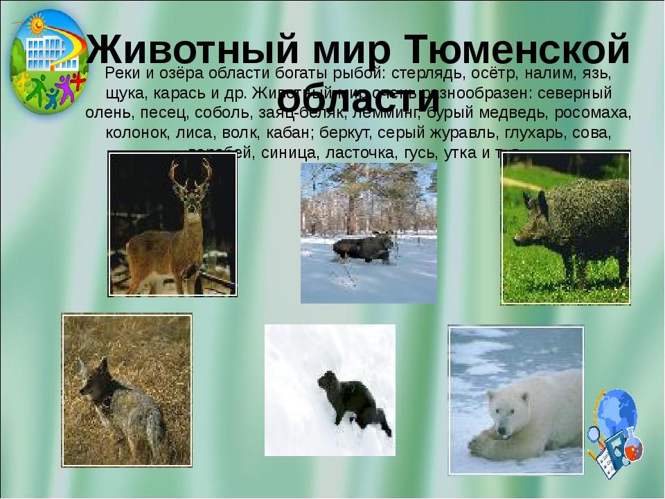 Животный мир Тюменской области Реки и озёра области богаты рыбой: стерлядь, о...