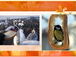 Хлеб нужно обязательно доедать, а крошками кормить птиц.