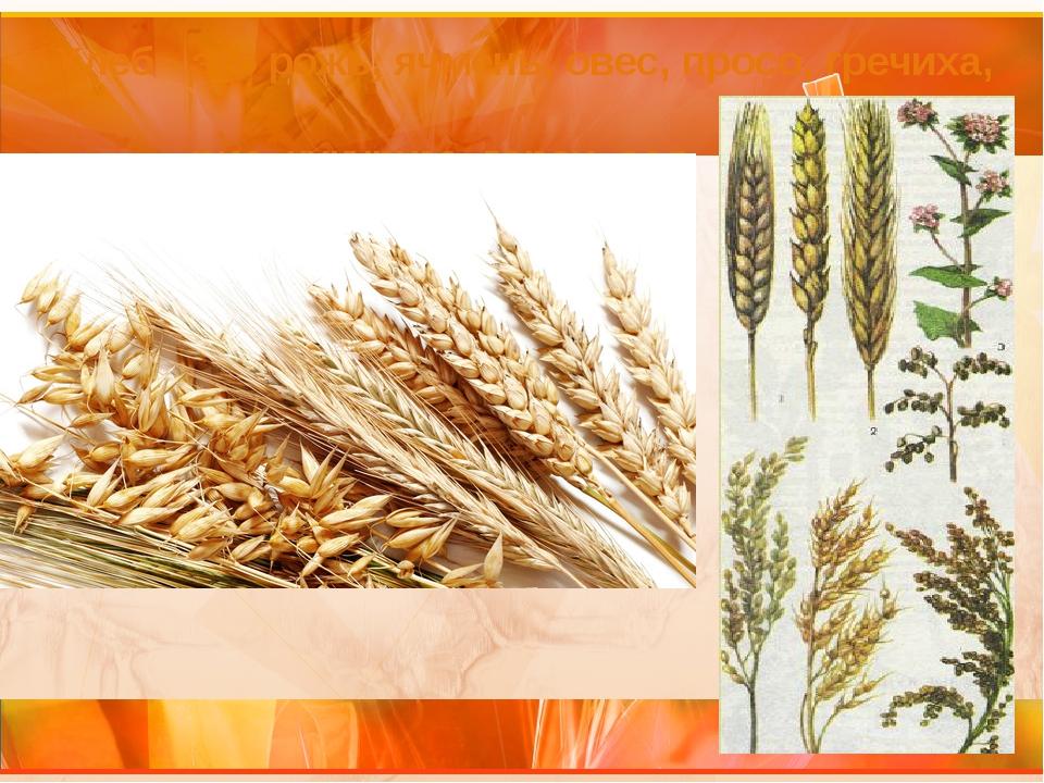 Хлеб - это рожь, ячмень, овес, просо, гречиха, рис, кукуруза, горох, соя