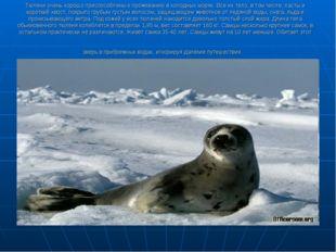 Тюлени очень хорошо приспособлены к проживанию в холодных морях. Все их тело,