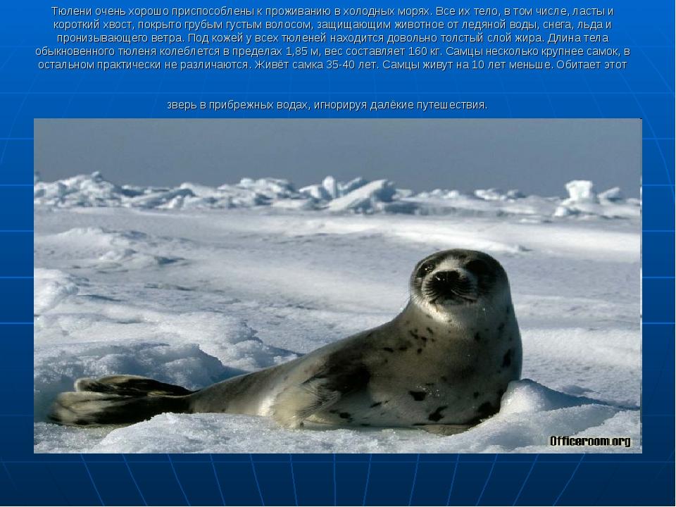 Тюлени очень хорошо приспособлены к проживанию в холодных морях. Все их тело,...