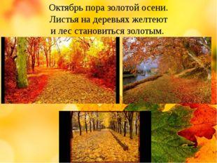Октябрь пора золотой осени. Листья на деревьях желтеют и лес становиться зол
