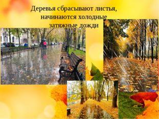 Деревья сбрасывают листья, начинаются холодные затяжные дожди
