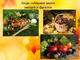 Люди собирают много овощей и фруктов