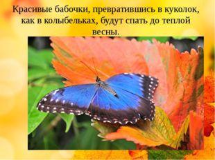 Красивые бабочки, превратившись в куколок, как в колыбельках, будут спать до