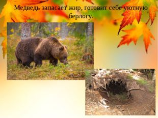 Медведь запасает жир, готовит себе уютную берлогу.
