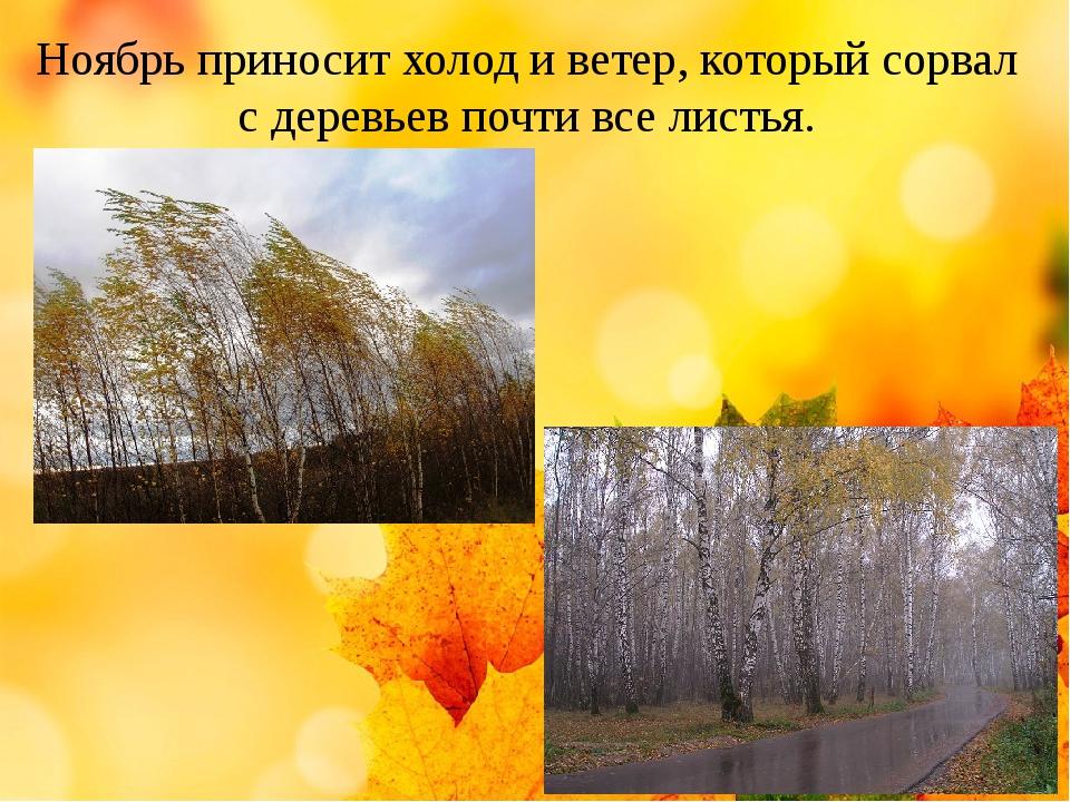 Ноябрь приносит холод и ветер, который сорвал с деревьев почти все листья.