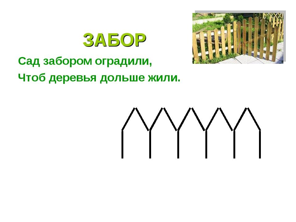 ЗАБОР Сад забором оградили, Чтоб деревья дольше жили.