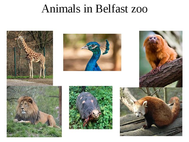 Animals in Belfast zoo