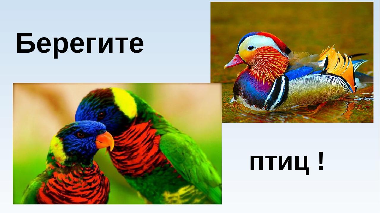 Берегите птиц !