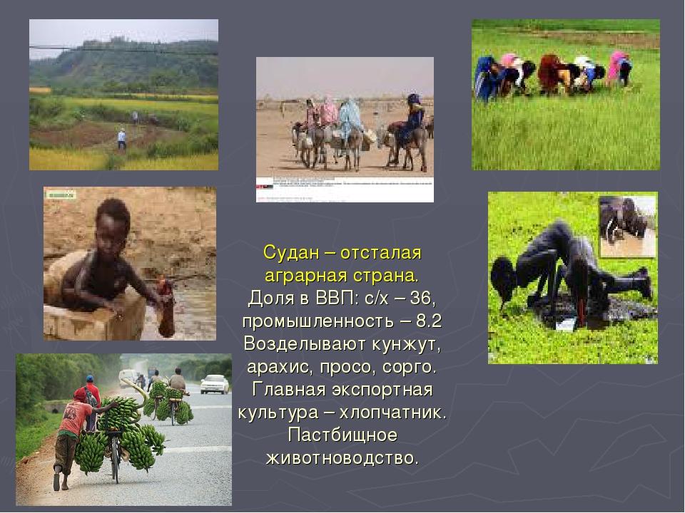 Судан – отсталая аграрная страна. Доля в ВВП: с/х – 36, промышленность – 8.2...