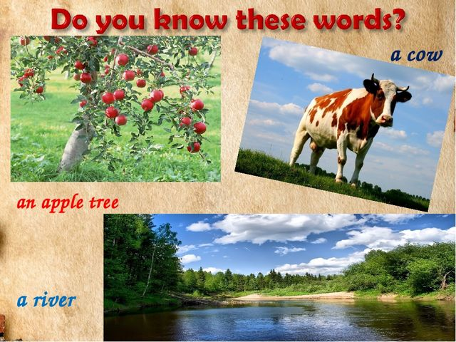 a river an apple tree a cow