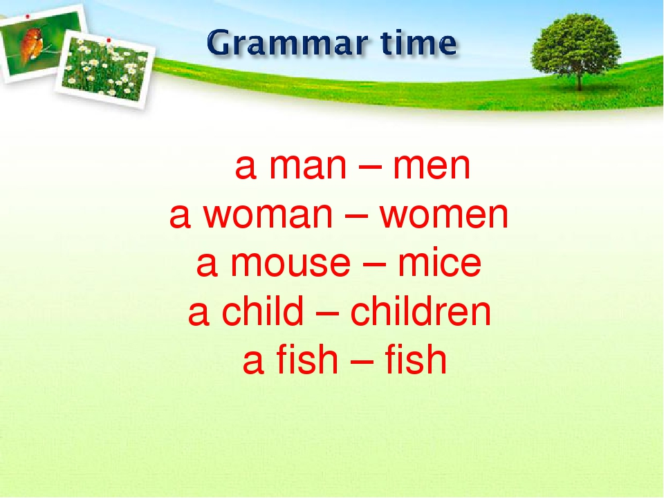 a man – men a woman – women a mouse – mice a child – children a fish – fish