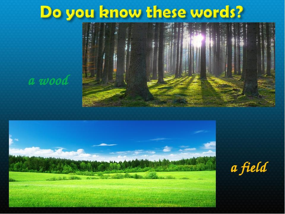 a wood a field