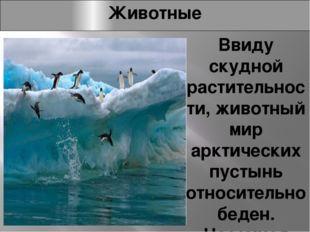 Животные Ввиду скудной растительности, животный мир арктических пустынь относ