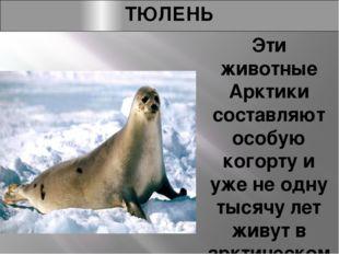 ТЮЛЕНЬ Эти животные Арктики составляют особую когорту и уже не одну тысячу ле