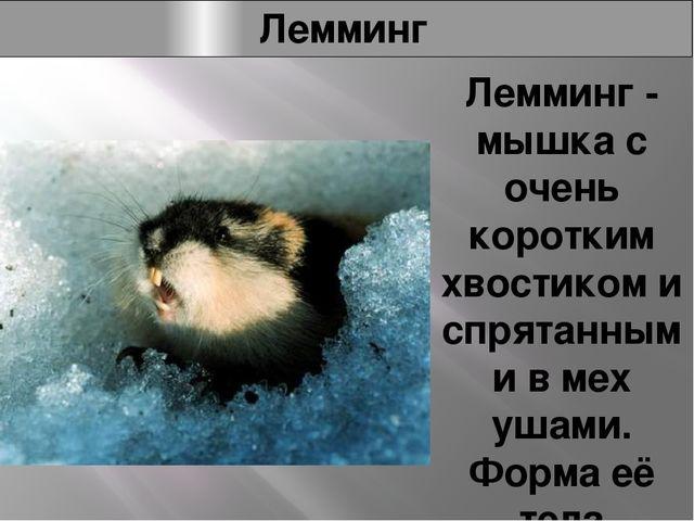 Лемминг Лемминг - мышка с очень коротким хвостиком и спрятанными в мех ушами....
