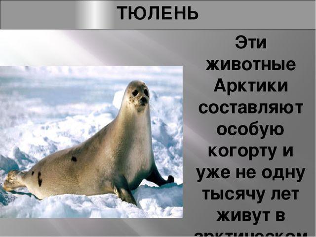 ТЮЛЕНЬ Эти животные Арктики составляют особую когорту и уже не одну тысячу ле...